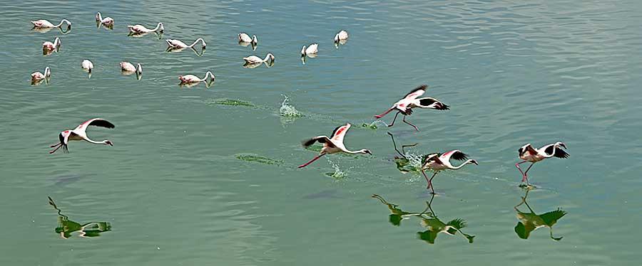 Fotoreise_Fotosafari_Fotoworkshop_Benny-Rebel_Afrika_Tansania_002_Flamingo