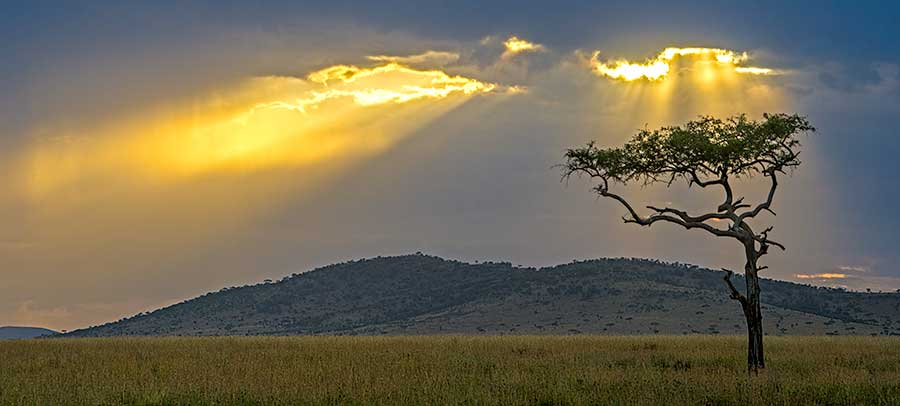 Fotoreise_Fotosafari_Fotoworkshop_Benny-Rebel_Afrika_Tansania_081_Serengeti