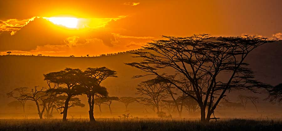 Fotoreise_Fotosafari_Fotoworkshop_Benny-Rebel_Afrika_Tansania_083_Serengeti