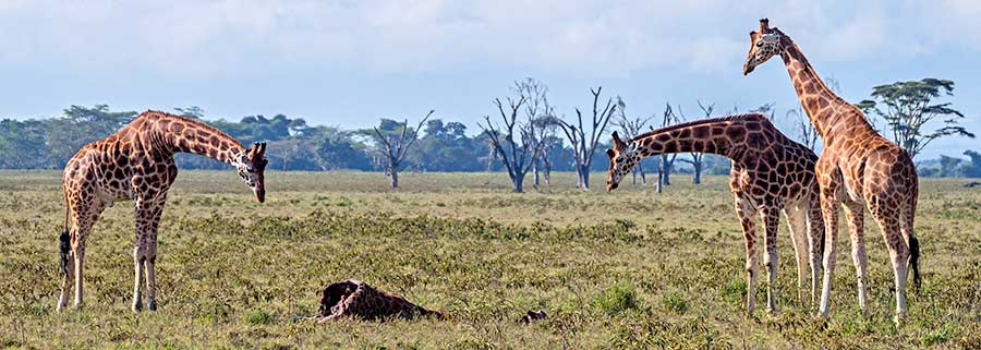 Fotoreise_Foto-Safari_Kenia_Lake_Nakuru_DSC0725