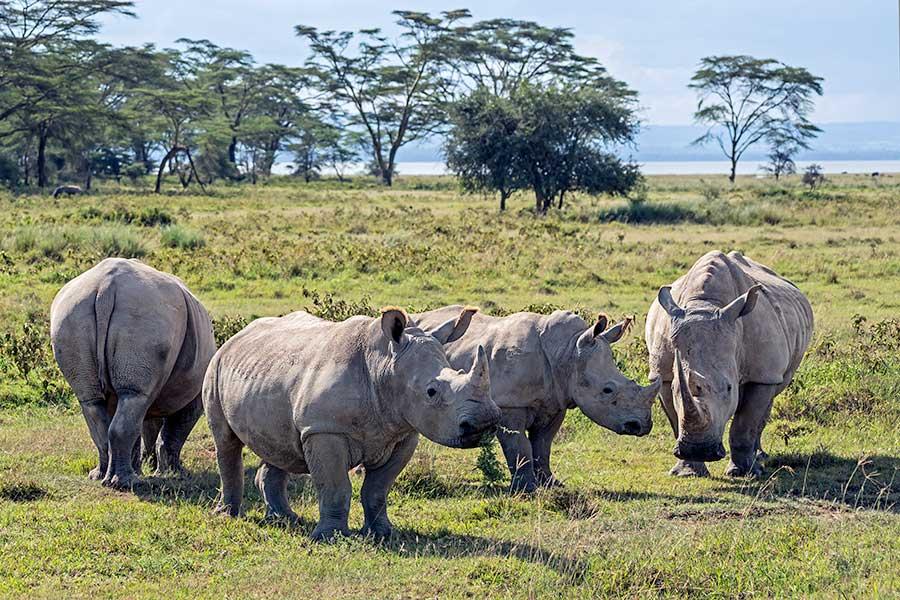 Fotoreise_Foto-Safari_Kenia_Lake_Nakuru_DSC0912