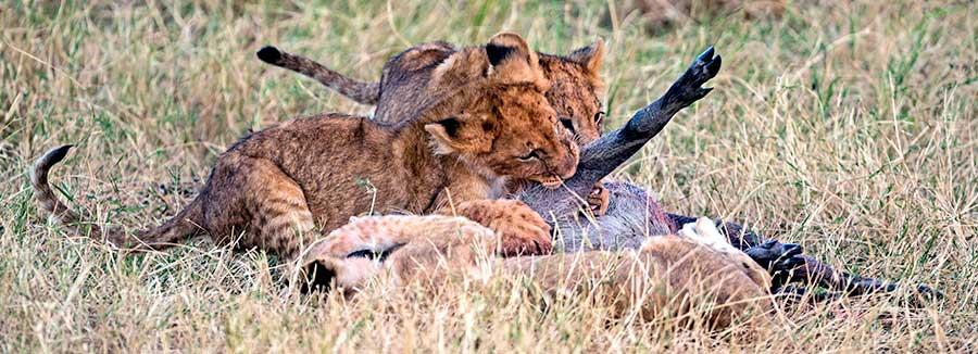 Fotoreise_Foto-Safari_Kenia_Masai_Mara_DSC0315