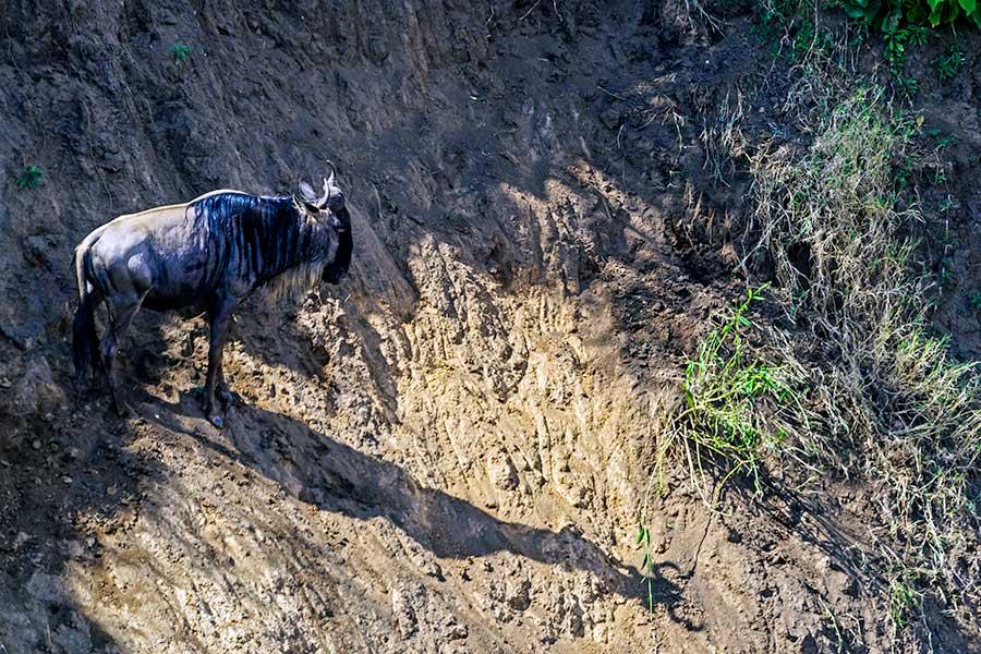 Fotoreise_Foto-Safari_Kenia_Masai_Mara_DSC0489