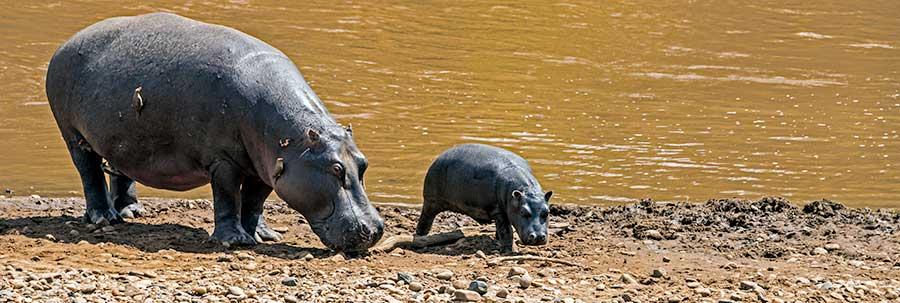 Fotoreise_Foto-Safari_Kenia_Masai_Mara_DSC1814