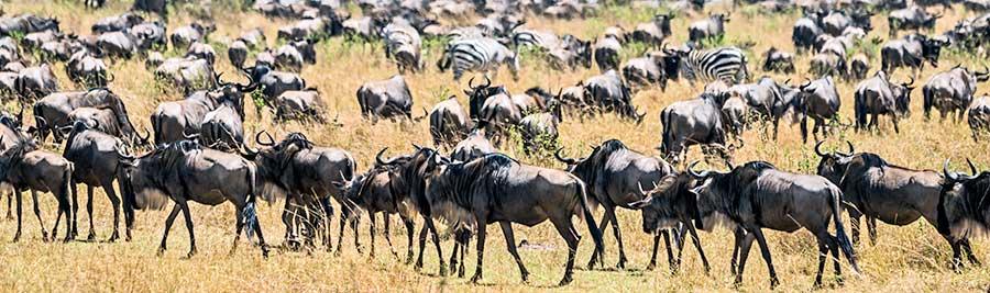 Fotoreise_Foto-Safari_Kenia_Masai_Mara_DSC2175
