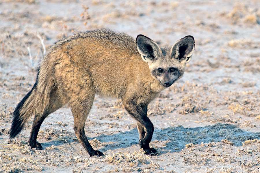 Botswana-Fotoreise-Fotosafari-Benny-Rebel-Afrika-003