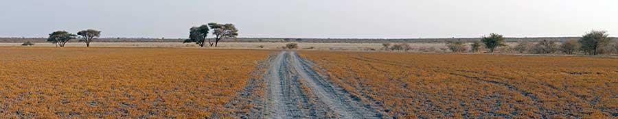 Botswana-Fotoreise-Fotosafari-Benny-Rebel-Afrika-009