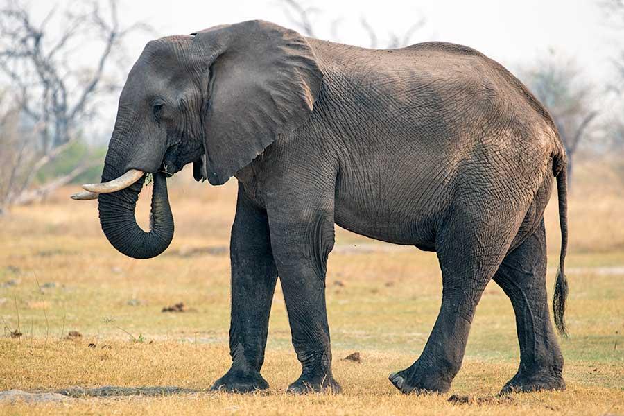 Botswana-Fotoreise-Fotosafari-Benny-Rebel-Afrika-015