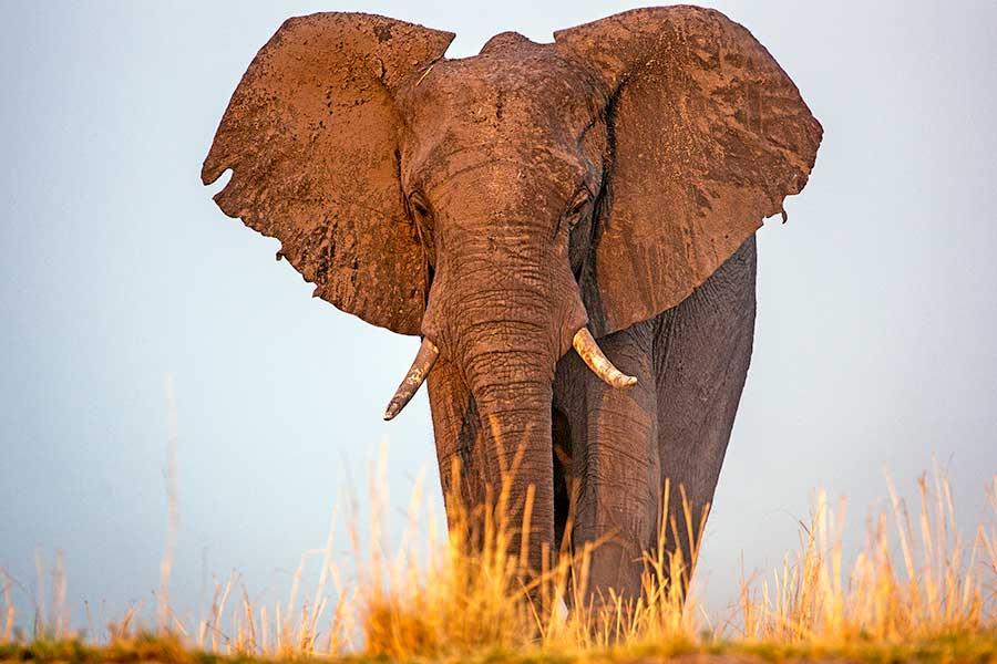 Botswana-Fotoreise-Fotosafari-Benny-Rebel-Afrika-015a