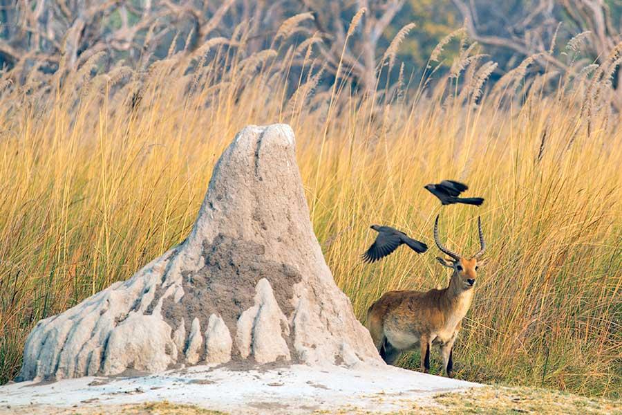 Botswana-Fotoreise-Fotosafari-Benny-Rebel-Afrika-018