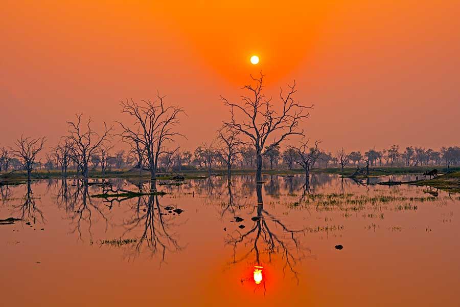 Botswana-Fotoreise-Fotosafari-Benny-Rebel-Afrika-020