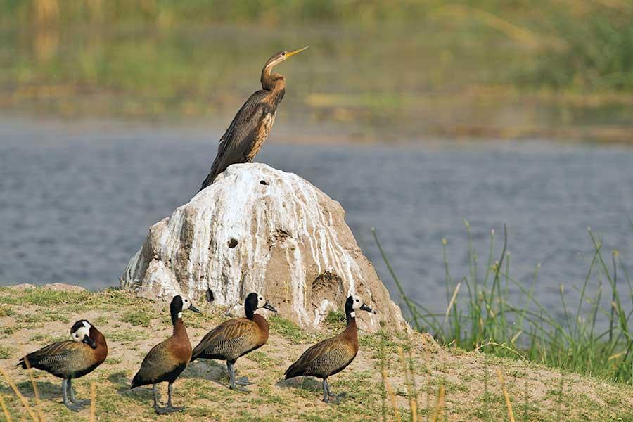 Botswana-Fotoreise-Fotosafari-Benny-Rebel-Afrika-022