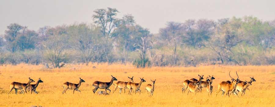 Botswana-Fotoreise-Fotosafari-Benny-Rebel-Afrika-024