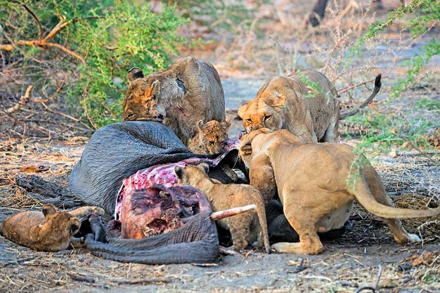 Botswana-Fotoreise-Fotosafari-Benny-Rebel-Afrika-026
