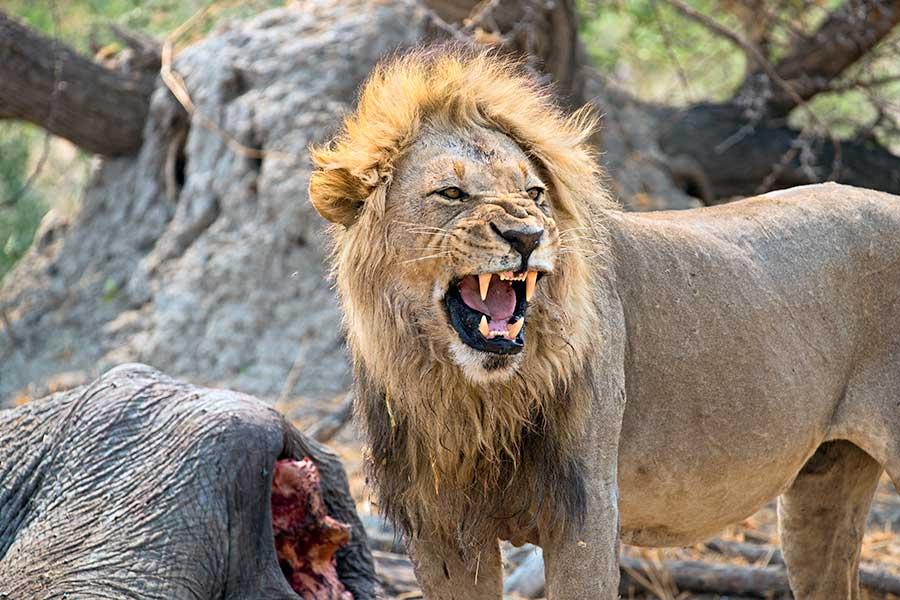 Botswana-Fotoreise-Fotosafari-Benny-Rebel-Afrika-027