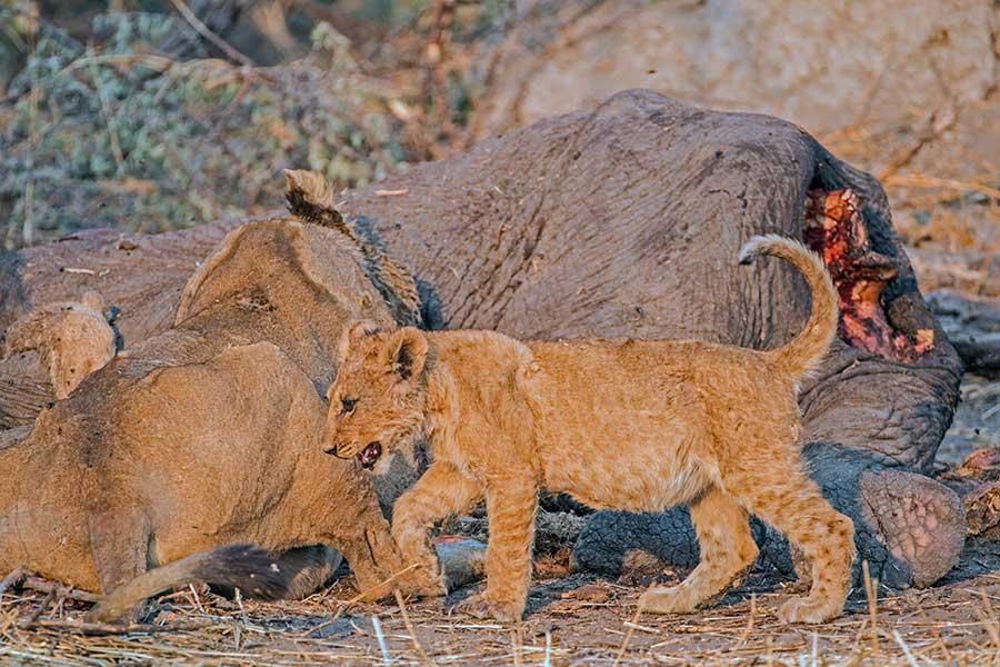 Botswana-Fotoreise-Fotosafari-Benny-Rebel-Afrika-028