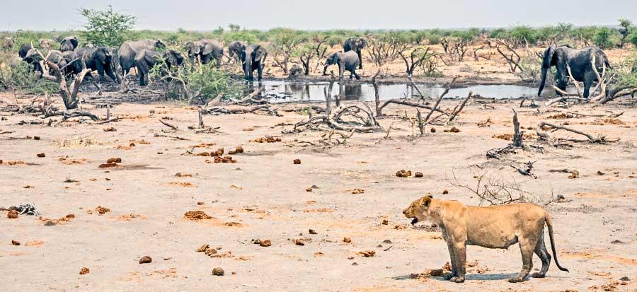 Botswana-Fotoreise-Fotosafari-Benny-Rebel-Afrika-029