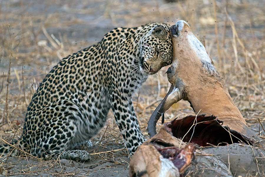 Botswana-Fotoreise-Fotosafari-Benny-Rebel-Afrika-030