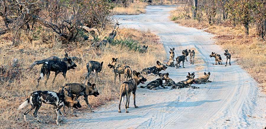Botswana-Fotoreise-Fotosafari-Benny-Rebel-Afrika-031