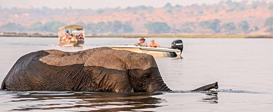 Botswana-Fotoreise-Fotosafari-Benny-Rebel-Afrika-034