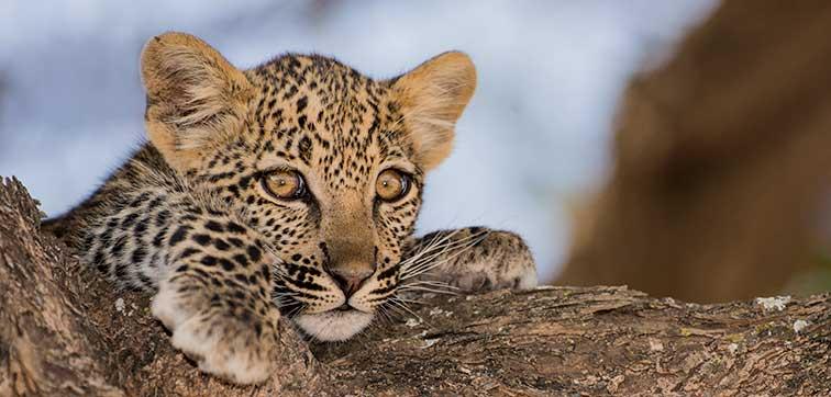 Fotoreise_Fotosafari_Tansania_Afrika_001