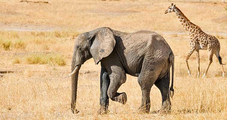 Fotoreise_Fotosafari_Tansania_Afrika_007