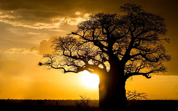Fotoreise_Fotosafari_Tansania_Afrika_012