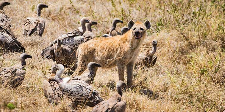 Fotoreise_Fotosafari_Tansania_Afrika_017