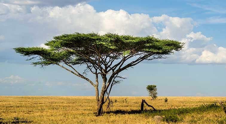 Fotoreise_Fotosafari_Tansania_Afrika_025