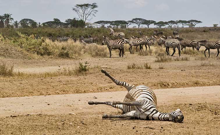 Fotoreise_Fotosafari_Tansania_Afrika_030