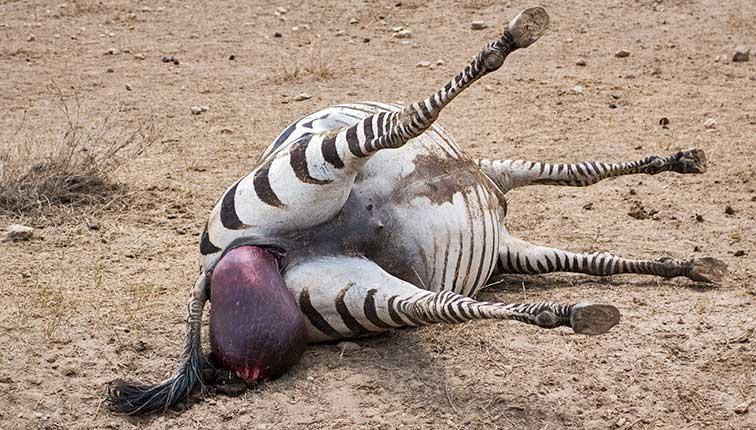 Fotoreise_Fotosafari_Tansania_Afrika_031