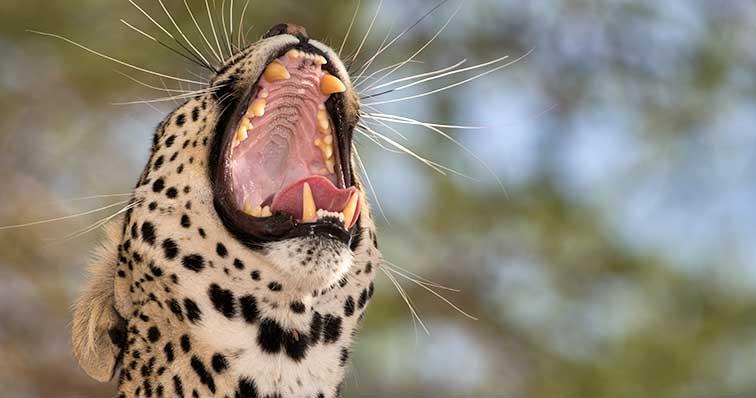 Fotoreise_Fotosafari_Tansania_Afrika_036