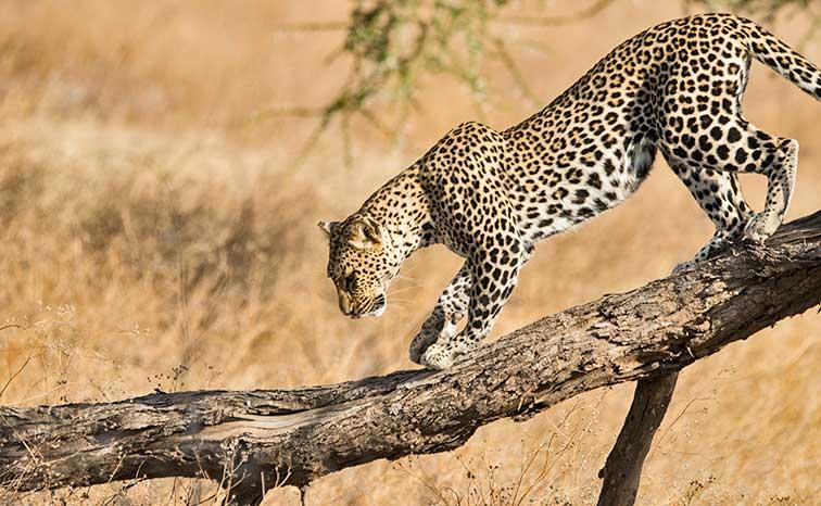 Fotoreise_Fotosafari_Tansania_Afrika_037