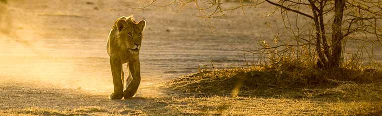 Fotoreise_Fotosafari_Tansania_Afrika_039
