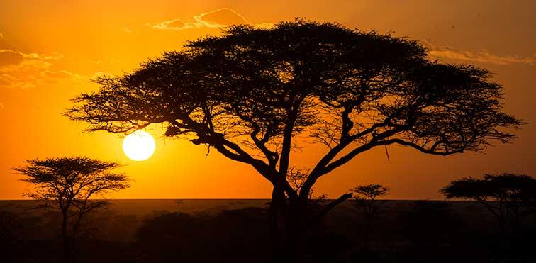 Fotoreise_Fotosafari_Tansania_Afrika_999