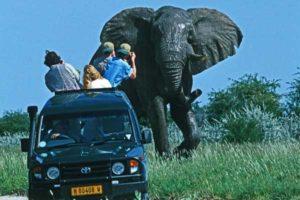 Auto-Elefant