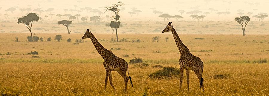 Fotoreise-Foto-Safari-Fotoworkshop-Afrika-Benny-Rebel-Kenia-A100
