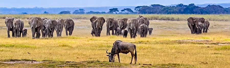 Fotoreise-Foto-Safari-Fotoworkshop-Afrika-Benny-Rebel-Kenia-A102