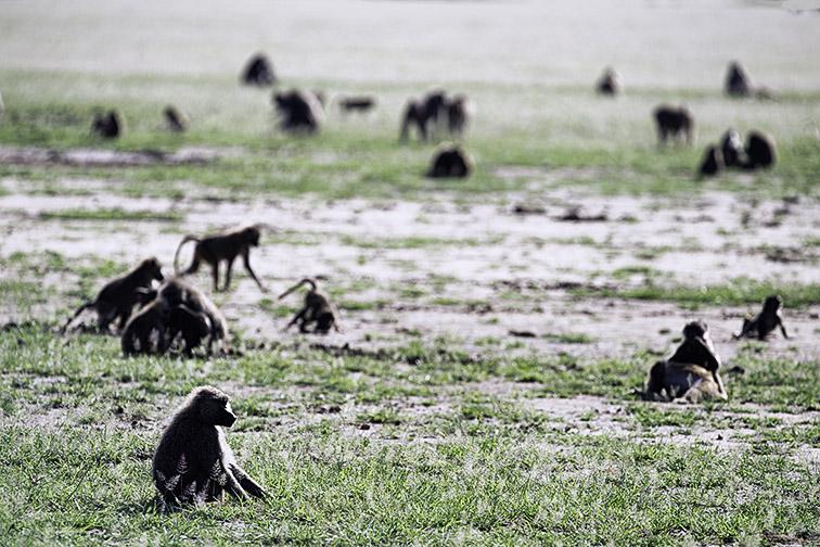 Fotoreise_Fotosafari_Afrika_Tansania_Benny_Rebel-_DSC0001
