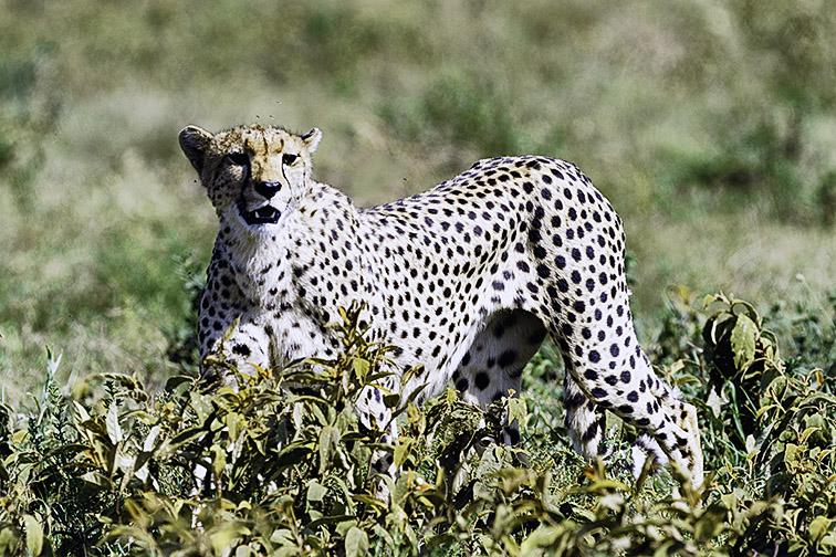 Fotoreise_Fotosafari_Afrika_Tansania_Benny_Rebel-_DSC0637