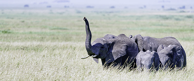 Fotoreise_Fotosafari_Afrika_Tansania_Benny_Rebel_DSC0007