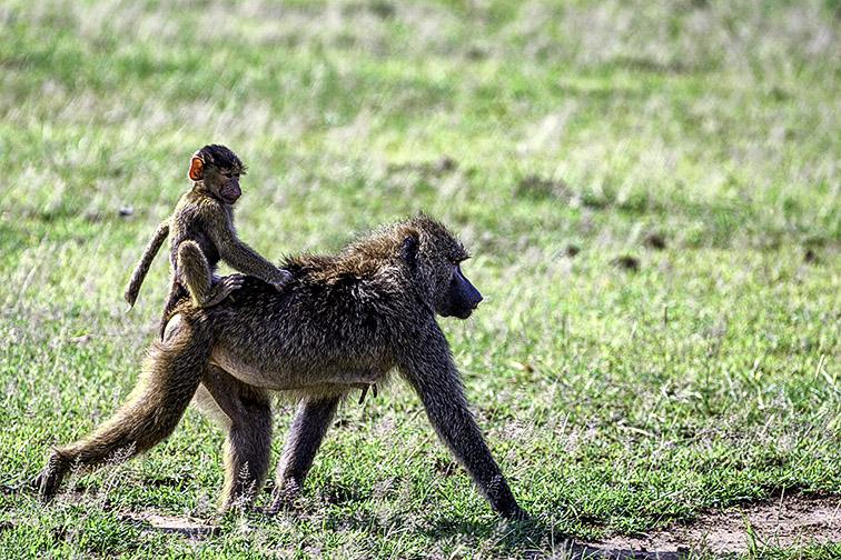 Fotoreise_Fotosafari_Afrika_Tansania_Benny_Rebel_DSC0014