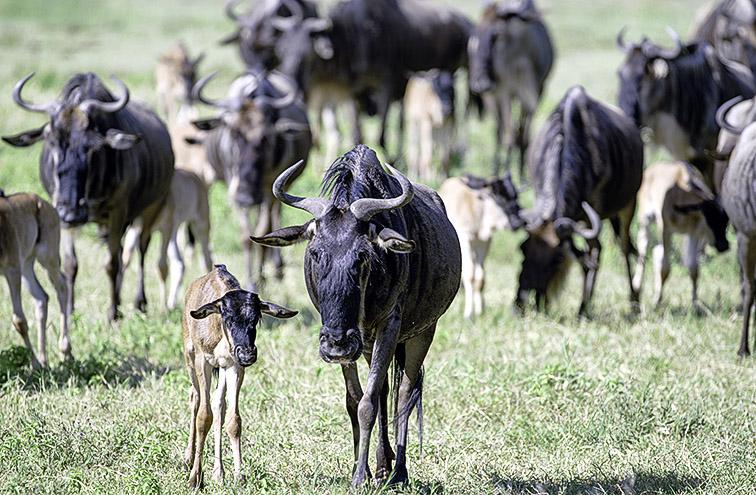 Fotoreise_Fotosafari_Afrika_Tansania_Benny_Rebel_DSC0055