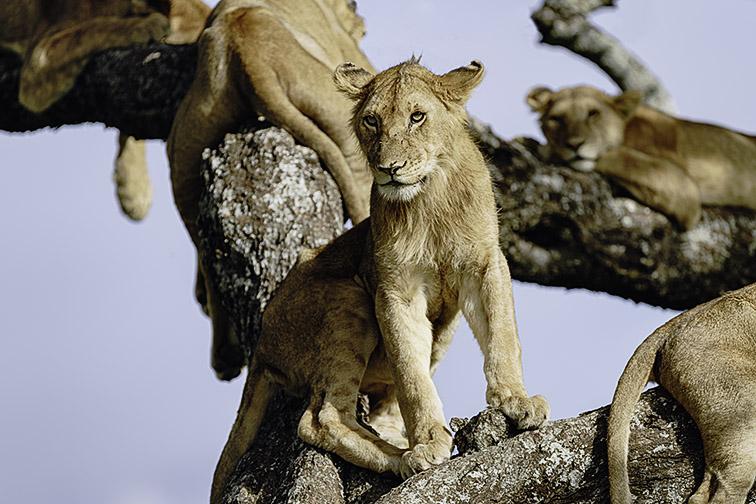 Fotoreise_Fotosafari_Afrika_Tansania_Benny_Rebel_DSC0182