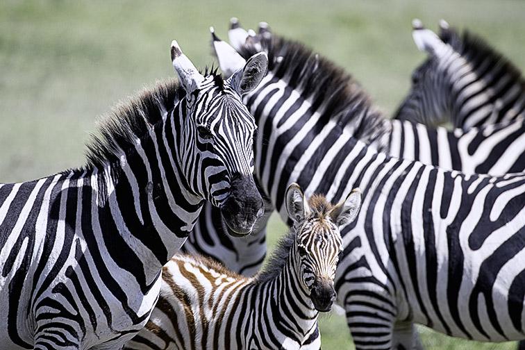 Fotoreise_Fotosafari_Afrika_Tansania_Benny_Rebel_DSC0214