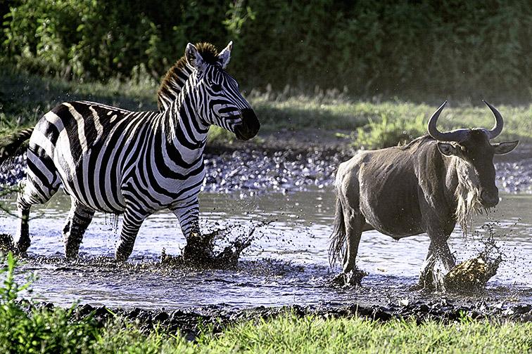 Fotoreise_Fotosafari_Afrika_Tansania_Benny_Rebel_DSC0888