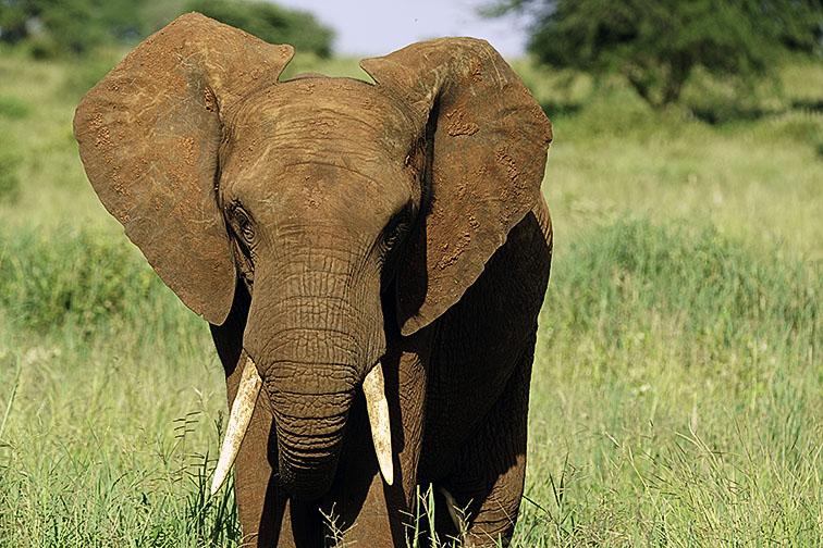 Fotoreise_Fotosafari_Afrika_Tansania_Benny_Rebel_DSC2657