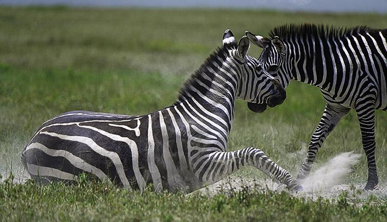 Fotoreise_Fotosafari_Afrika_Tansania_Benny_Rebel_DSC3239