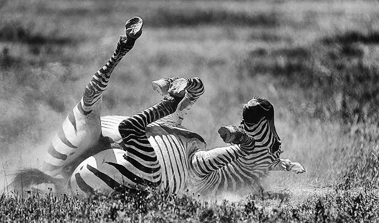 Fotoreise_Fotosafari_Afrika_Tansania_Benny_Rebel_DSC3255