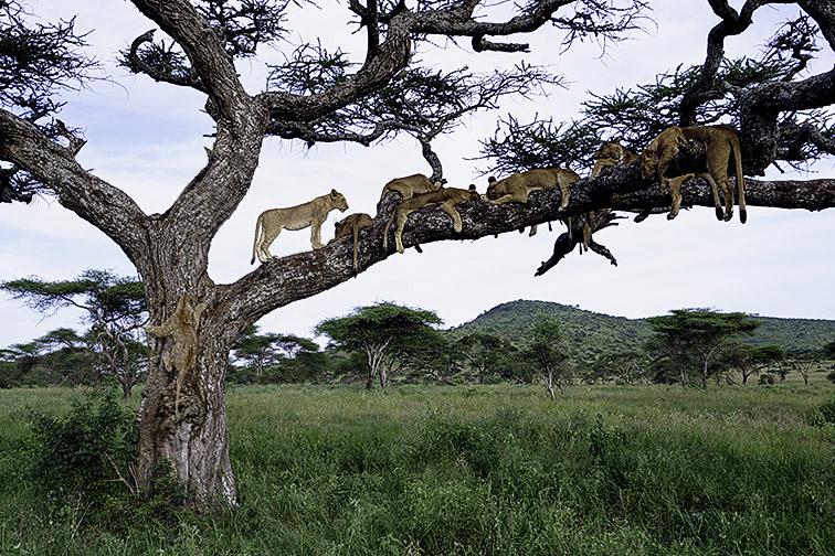 Fotoreise_Fotosafari_Afrika_Tansania_Benny_Rebel_DSC3510